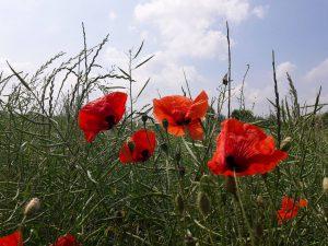 Lesung bei den Landfrauen Rhumetal @ Michaela Diedrich | Rhumspringe | Niedersachsen | Deutschland